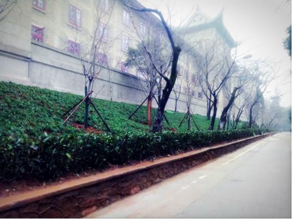 樱花大道焕然一新 期待来年繁花满枝